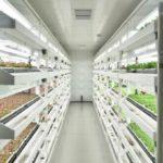 京東集団と三菱ケミカルが中国・北京で植物工場を稼働開始