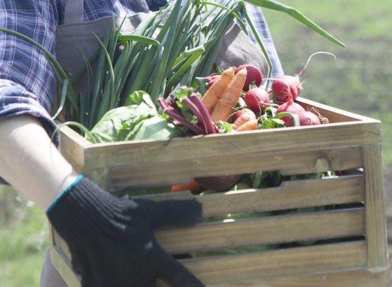 デリカフーズHD、農業総合研究所と青果物流通の業務提携解消