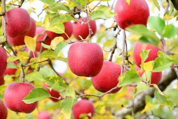 ヤマト運輸とヤマトグローバルロジ、青森県が特産品の流通拡大で連携