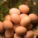 鴻池運輸が北インドで鶏卵の安全輸送実証を開始へ