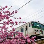 JR東、特急踊り子で朝摘みいちごを東京駅に輸送