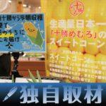 【独自取材】北海道産のトウモロコシ、収穫当日に首都圏のスーパーで販売可能