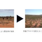 日本郵船、豪で原生林再生を通じた温室効果ガス排出権販売会社へ出資